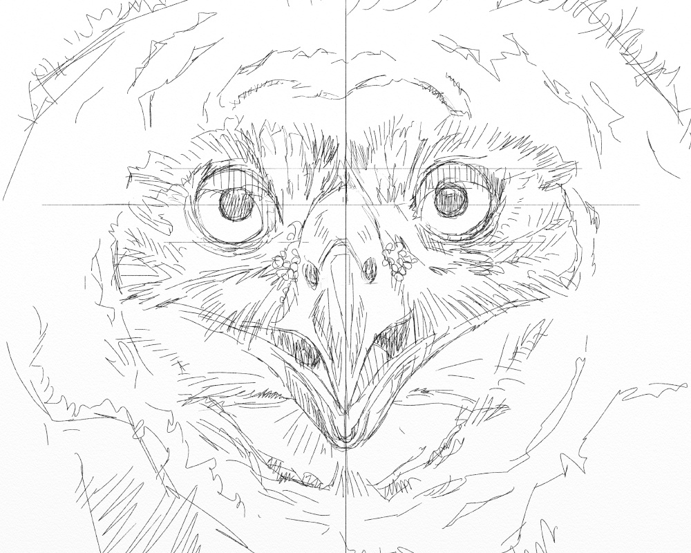 Eagle owl juv 1a