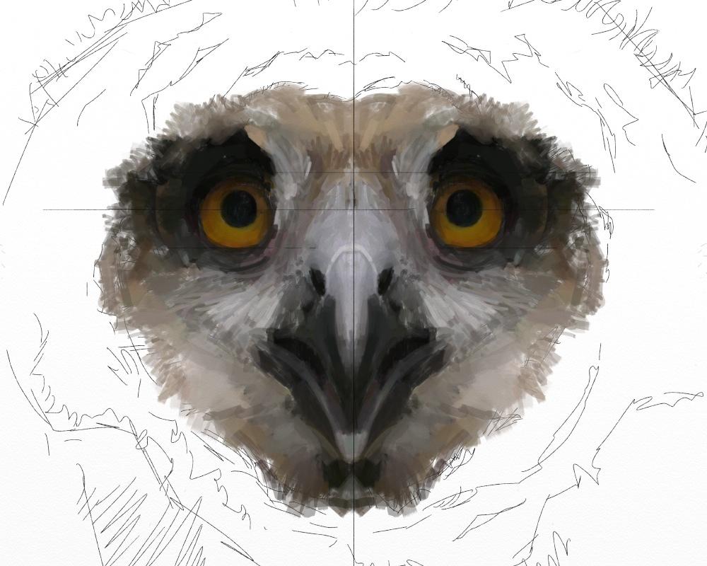 Eagle owl juv 1d
