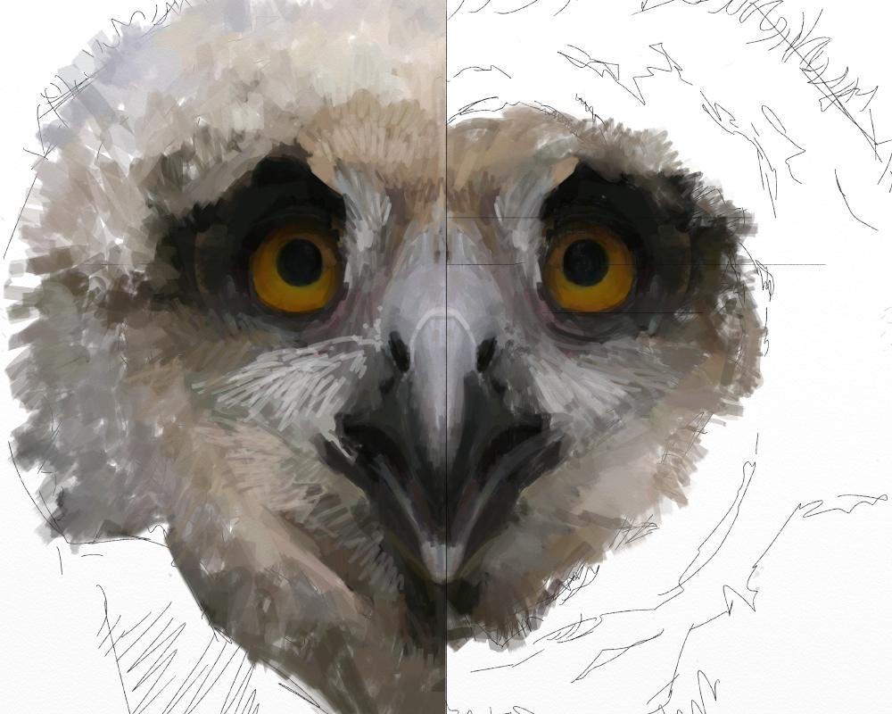 Eagle owl juv 1e