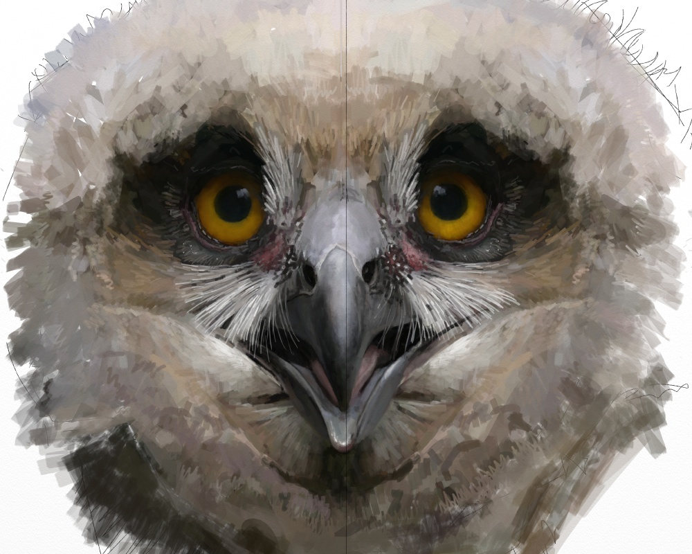 Eagle owl juv 1f