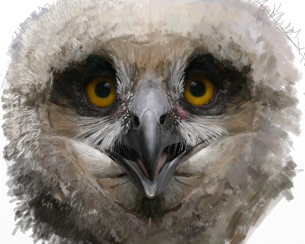 Eagle owl juv 1g