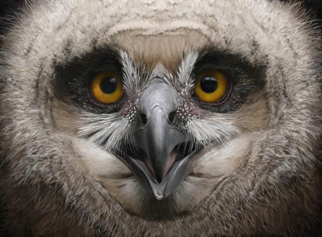 Eagle owl juv 1h
